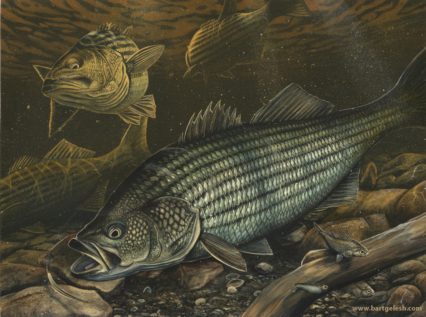 Main gallery bartgelesh for Fish on main