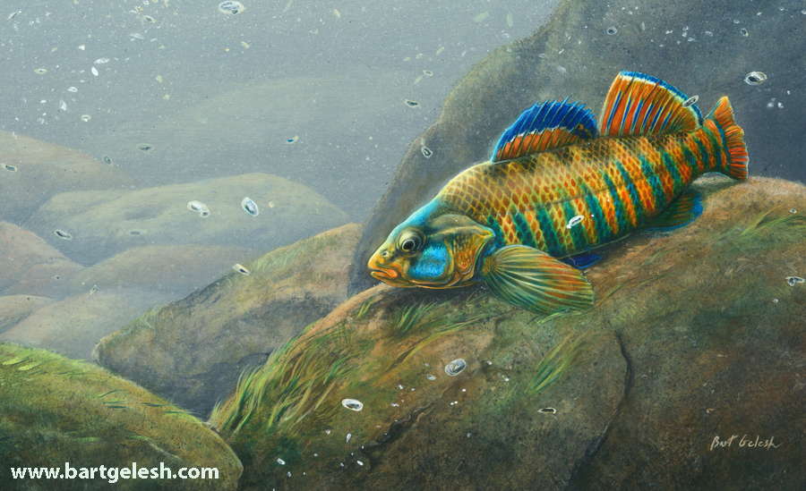 new native fish painting bartgelesh